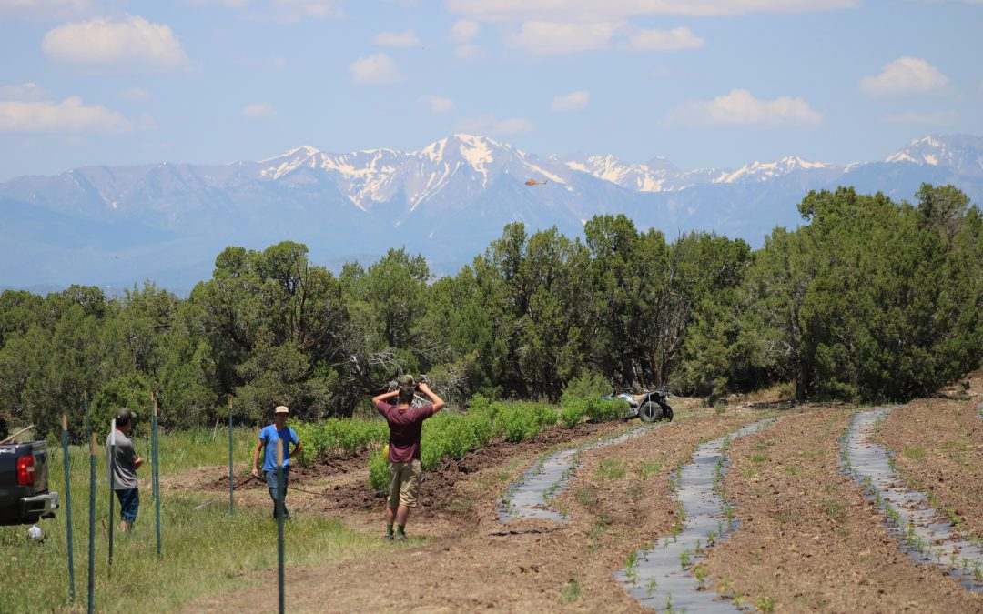 Colorado's CHAMP: Planting the Seeds of the Future