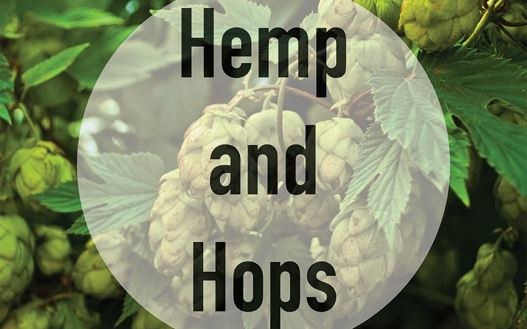 Hemp and Hops: Terpenes and Their Aromatic Allure